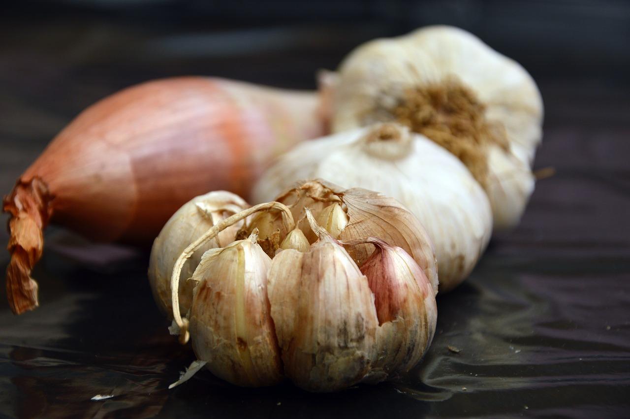 Alimentos que os cães não podem comer - Alho & Cebola