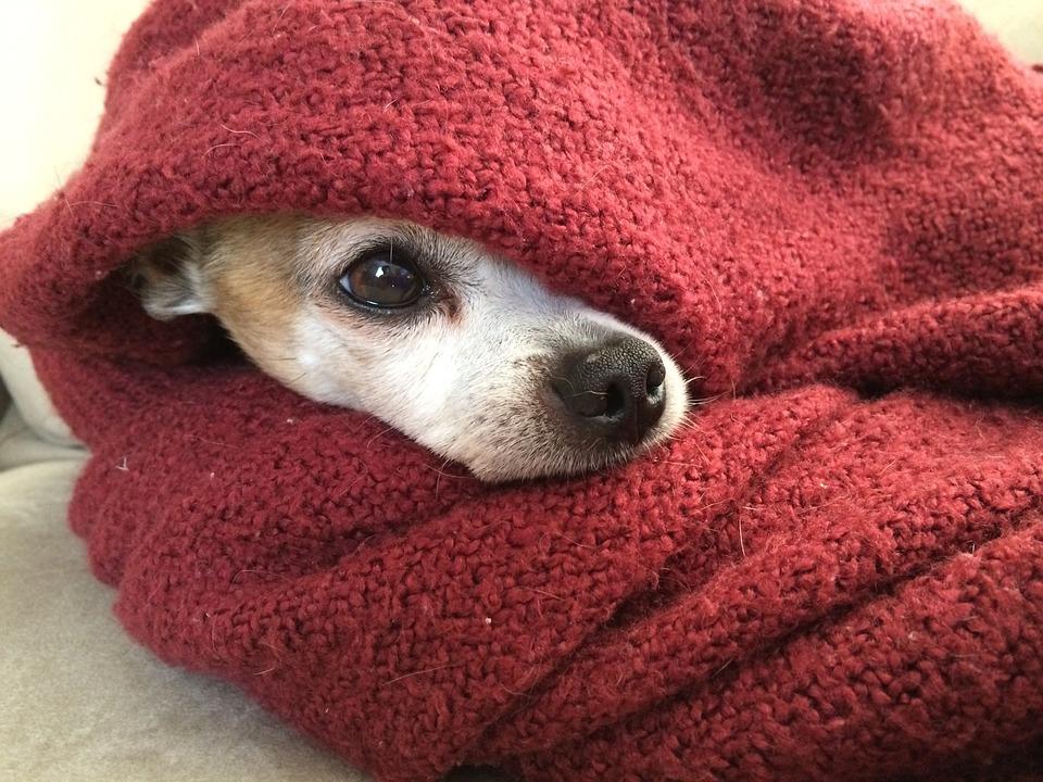 Cuidados a ter com o seu cão no Inverno - Dias Frios