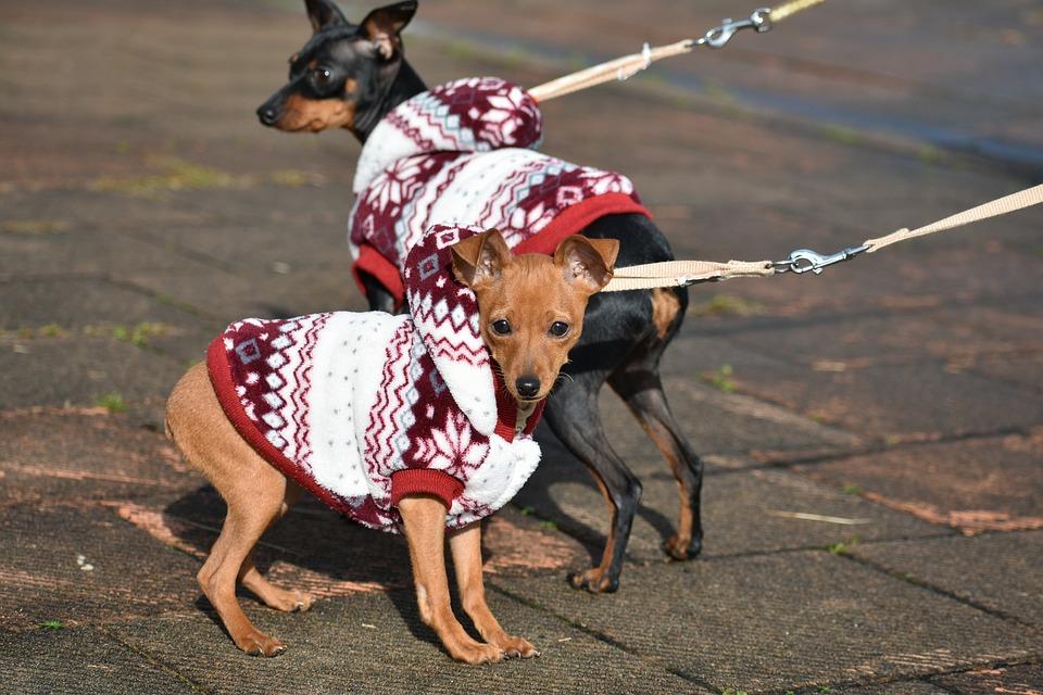 Cuidados com os cães no Frio / Inverno