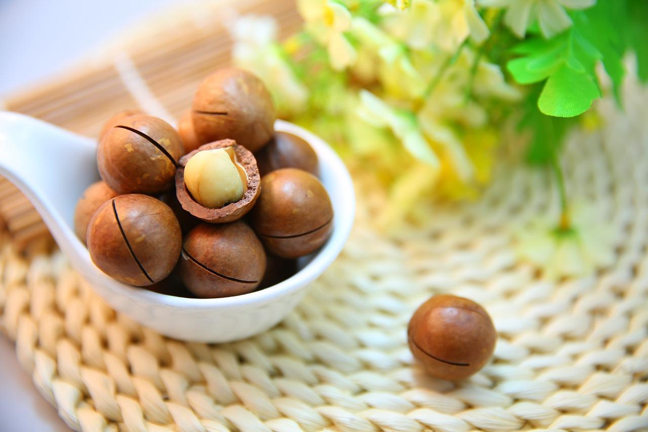Alimentos que os cães não podem comer - Macadamia