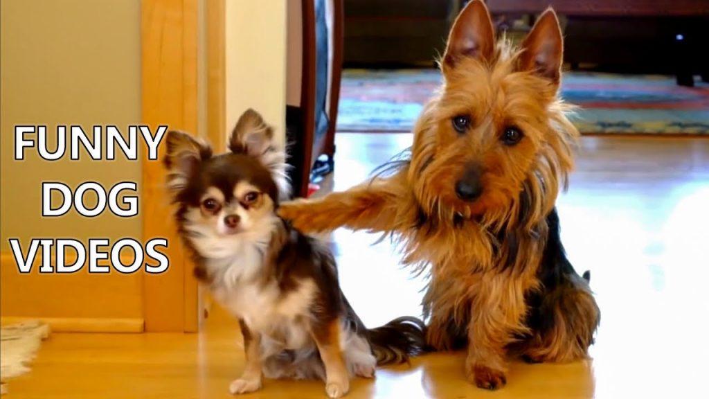 Desafio tente não rir – Momentos engraçados com cães (Vídeos divertidos)