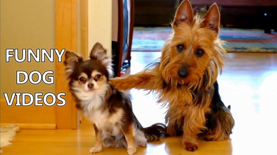 Tente não rir - Cães - Vídeo divertido