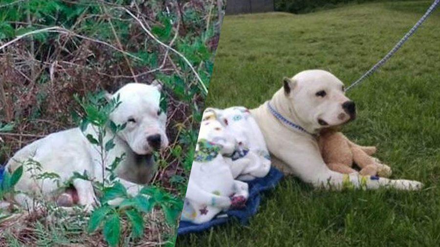 Cão abandonado em plena floresta tem peluche como seu amigo