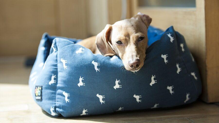 Como Ensinar Cachorro Dormir sua Caminha