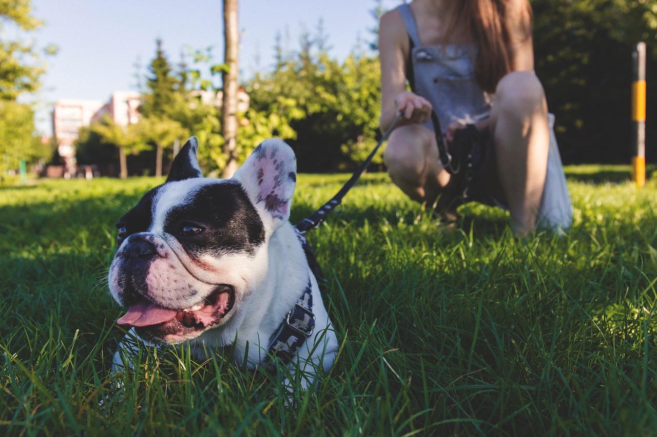 Como ensinar o cachorro a andar na trela