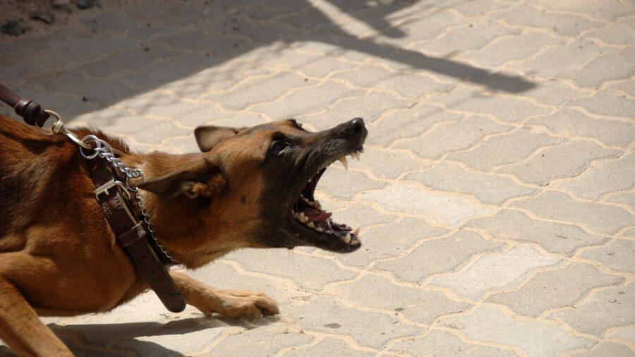 Como ensinar o cão a não morder?