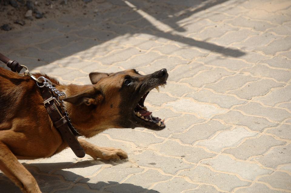 Como ensinar cão a não morder