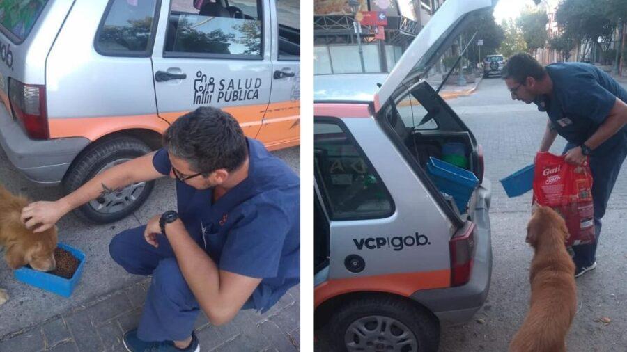 Nesta cidade, os veterinários saem à rua para alimentar cães abandonados