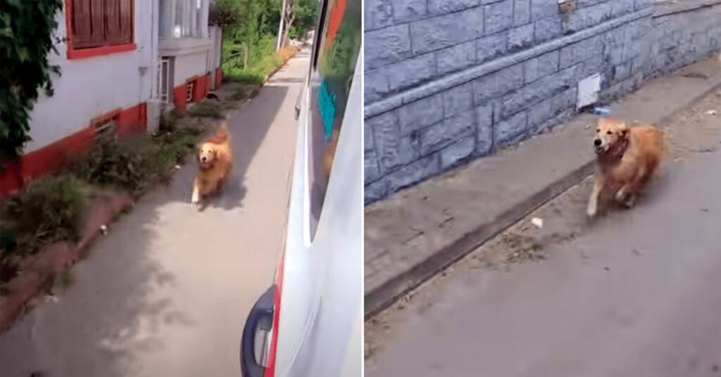 Cadela persegue ambulância onde segue a dona e fica à espera no hospital